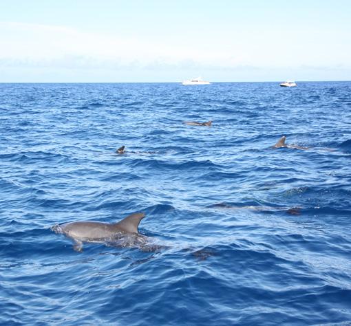 39イルカと泳ぐ_6014